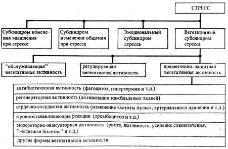 Схема развития вегетативного